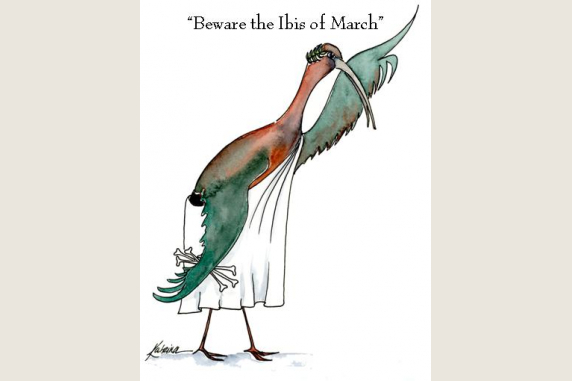 Beware the Ibis of March