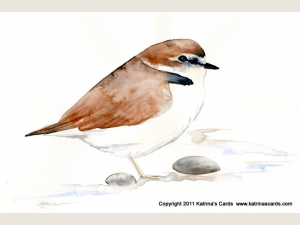 Snowy Plover Note Card Gift Set