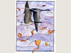 Flight of Fall Note card Gift Set