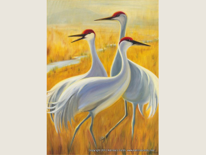 Sandhill Trio  Note Card Gift Set